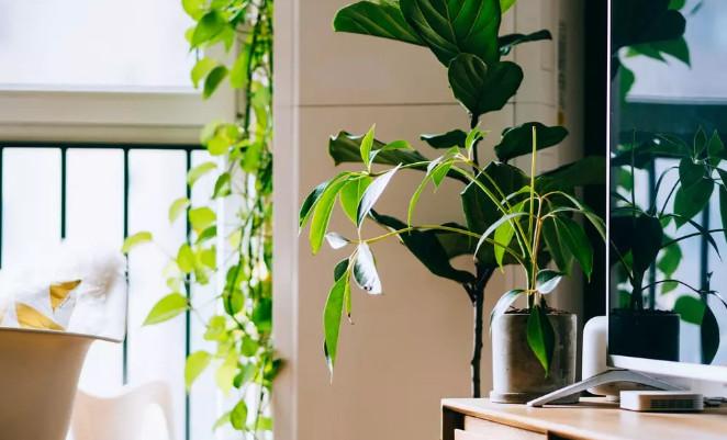 长期宅家,室内甲醛的危害可不能忽视